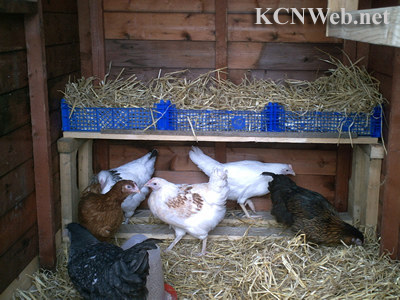 Chicken shed nestboxes